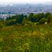 Wanderung Puchenau - Pöstlingberg - Linz