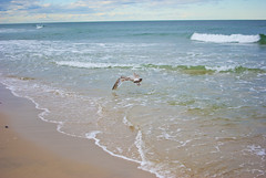beach 15 (Hey_Lee! Photography) Tags: ocean new sea summer seagulls beach water seaside sand waves nj jersey