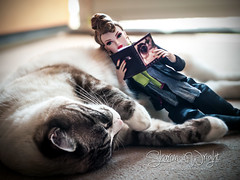 Bedtime Stories (shesalwayswright) Tags: pet fashion cat toy photography reading book model friend doll barbie siamese sharon poppy wright parker tulabelle