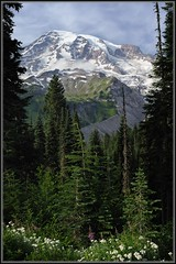 Vertical View (Ernie Misner) Tags: mountain cold beautiful washington high mountrainier