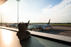 17.06.12: I'm leavin' on a jet plane. Hope I'll be back soon again (Wang Wang 22) Tags: ireland dublin dog cute travelling airport nikon pug irland plush hund 365 flughafen nici pictureoftheday mops d90 fotodestages wangwang wangwang22