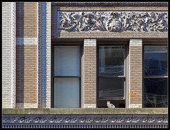 Olive Street (ioensis) Tags: street brick window saint june st architecture cat louis kitten olive mo missouri jdl 2013 ioensis 05651005067tmtc1b