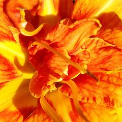 YELLOW! (sterno_yankees) Tags: pink orange plants flower macro colors leaves yellow nikon purple bees strawberries stems raspberries photostream hipstamatic
