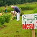Faculty and staff volunteers weed around crops at the Agroecology Education Farm during a volunteer work day.NS.FarmWorkday.8038