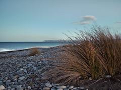 Beach Grass and White Cliffs (Thomas J. Walsh) Tags: blue newzealand beach reeds gum vineyard day clear coastal grapes blenheim marlborough renwick rarangi woodbourne cloudybay
