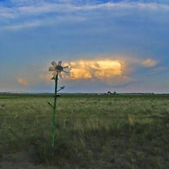 Wild Flower (Whatknot) Tags: trip nebraska 2006 carhenge alliance whatknot