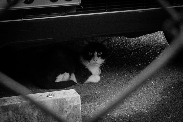 Today's Cat@2013-08-01
