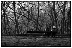 Observing Nature in High Park (d[^.-]b..oO(MJWong)) Tags: leica blackandwhite toronto ontario canada tree classic film grass bench mom spring couple sitting highpark forrest kodak outdoor daughter lawn mother may streetphotography d76 epson daytime m6 400asa flowersplants v700 zeissplanar250zm
