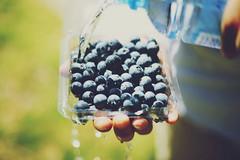 Blueberries (Amanda Mabel) Tags: summer macro green nature water closeup fruit hands focus bokeh blueberry dew waterdroplets waterbottle blueberries foodphotography amandamabel amandamabelphotography