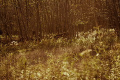 IMG_6239 (JaredNarber) Tags: park trees mountain macro fall nature leaves barn rural landscape wildlife country hike pa worldsend pennsylvannia flowersplants eaglesmere wallk jarednarber