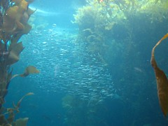 """The Monterey Bay Aquarium • <a style=""""font-size:0.8em;"""" href=""""http://www.flickr.com/photos/109120354@N07/11043035053/"""" target=""""_blank"""">View on Flickr</a>"""