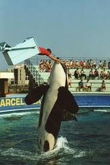 Ulises, Zoo Barcelona, 1990 (Merintia) Tags: barcelona orca ulises