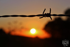 (Enrico Roemmler) Tags: sunset shadow sky sun sol wire do sombra barbwire por arame farpado