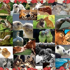 "happy valentine's day to alle earthlings. ""we may look different but in our capacity to feel we are the same"" #love #crueltyfree #feb14 #valentinesday #sanvalentino by #mozzarisella #rice #cheese #dairyfree #glutenfree #animalfree (mozzarisella) Tags: love square squareformat valentinesday feb14 bemyvalentine sanvalentino bemine 14febbraio iphoneography animalsarefriends instagramapp {vision}:{outdoor}=087 {uploaded}:{by}=instagram"