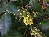 DSC02766 (Julie70 Joyoflife) Tags: flowers london spring fevrier photostroll photojuliekertesz midfebruary springwalksinlondon springflowersinfebruary