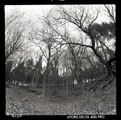 wooded hillside (pho-Tony) Tags: bw 3 slr 120 6x6 film zeiss mediumformat square lens reflex big delta jena fisheye communist waist level single 400 carl pro ddr socialist medium format commie pentacon heavy six ultrawide ilford gdr chunky ussr distorsion eastgermany distort barrell 80mm pentaconsix f35 arsat rollfilm carlzeiss 30mm zodiak pentaconsixtl ilforddelta ilforddelta400pro ilfosol 3035 biometar zodiak8b 6cmx6cm ilfosol3 zodiak8b