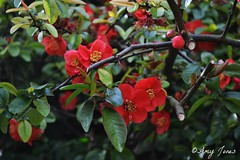 First Bloom (AmyJ1997) Tags: uk flowers england plants landscape places sunnyday castlepark frodsham