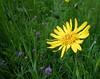 Flower (ponte1112) Tags: flower green yellow schweiz nikon s5100 coolpix che blume nikoncapturenx ponte1112