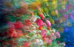 edwinloyolaNewYorkPortfolioReviewSpring01 (Edwin Loyola) Tags: autumn winter summer abstract fall nature seasons fineart fourseasons icm esl intentionalcameramovement edwinsloyola edwinloyola edwinloyolaphotography eslphotography