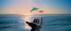 Augmented Reality (zacharymandrews) Tags: ocean origami pacific mixedmedia santamonica dolpnins zmaphoto zacharyandrews wwwzmaphotocom