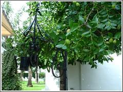Forjados junto a un frutal. (margabel2010) Tags: hojas rboles pozos cubos forjados frutales