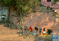 Jump fences, Penetrate walls, Overcome barriers, there is a world full of hope out there... (GOPAN G. NAIR [ GOPS Photography ]) Tags: tree photography hope varanasi kashi ganga benaras ghat gops gopan gopsorg gopangnair gopsphotography