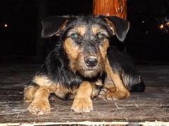 A dog from a park (creepyweirdslove) Tags: park dog sun cute nature animals serbia belgrade beograd srbija