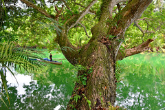 River Tree (free3yourmind) Tags: man green nature water river boat philippines bohol loboc