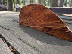 Tagli di stagione (Luquiét) Tags: wood art nature lines photography photo colours arte natura fotografia colori legno scatti linee fotografare passioni tagli