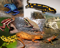 What are Amphibians? The Species of the World in Images (PhotographyPLUS) Tags: pictures graphics photos illustrations images stockphotos articles footage stockimage freephoto stockphotograph