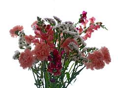 La vie en rose -3 (Micheo) Tags: pink flowers flores spain rosa granada bunch ramo snapdragons carnations claveles conejitos limonium jarrn primavera2016