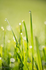 """""""Trnen der Nacht"""" (anton_zach) Tags: macro natur gras tau grn makro waldviertel morgentau"""