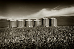 Washington Palouse (EdBob) Tags: sky blackandwhite bw plants usa monochrome field metal sepia clouds america landscape blackwhite washington spring pattern wheat monochromatic storage hills silos agriculture washingtonstate agricultural springtime palouse wheatfield easternwashington edmundlowe edmundlowephotography allmyphotographsarecopyrightedandallrightsreservednoneofthesephotosmaybereproducedandorusedinanyformofpublicationprintortheinternetwithoutmywrittenpermission