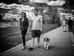 Dog walking (M.ALKHAMIS) Tags: street leica alkhamis malkhamis mtype240