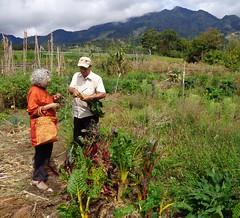 Shopping for organic veggies (Jhaan) Tags: school shopping highlands farming seeds organic veggies panama exchange cerropunta huertocasero