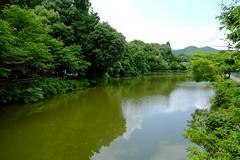 DSCF2262 (Sid Huang) Tags: camera travel japan photography kyoto flickr fuji view snap  fujifilm osaka   fujinon  fujicolor streetsnap xt10 visionsinmyhead xf1855f284rlmois sidhuang xf35mmf2rwr