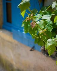 201607584 (Klaus Harbo) Tags: vin bourgogne beaune