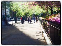 a sunny day walking the square  [ Explored  6-27-16 ] (BlogKing) Tags: sunlight philadelphia vanishingpoint sidewalk rittenhousesquare diagonals