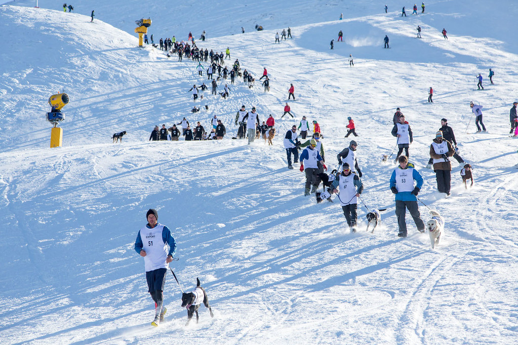 DB Export Dog Derby up Coronet Peak during the American Express Queenstown Winter Festival 2015