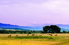 Landscape wallpaper: Such a good start for a fairytale (renkata23) Tags: trees sky mountain mountains color colour colors field fairytale landscape golden nikon scenery colorful colours outdoor harvest scene hills bulgaria mountainside purplesky nikonbulgaria