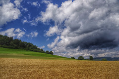 Rhler Schweiz (Michael Geran) Tags: blue sky mountain clouds harvest felder himmel wolken berge blau cereals baum weserbergland hgel