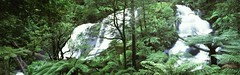 Forest Falls (rubberducky_me) Tags: panorama green film forest waterfall rainforest australia victoria falls linhof greatoceanroad otway triplefalls linhoftechnorama