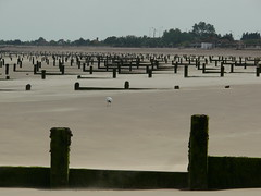 Dymchurch groynes (JayT47) Tags: beach groyne dymchurch