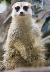 National Zoo  (1327) (smata2) Tags: zoo nationscapital smithsoniannationalzoo itsazoooutthere zoosofnorthamerica