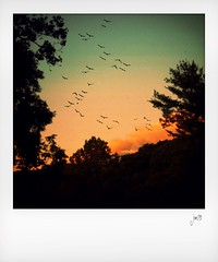 Sunset, June 18, 2016 (jeanne.marie.) Tags: pink trees sunset sky birds clouds colorful aqua silhouettes treescape elkmountain ashevillenc colorplay iphoneography iphone5s june182016