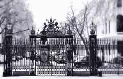 _majestic fence (SpitMcGee) Tags: uk england london fence europa explore kensingtongardens 105 zaun majestic hff spitmcgee happyfencefriday majesttische