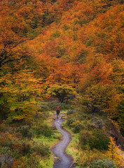 Everyday is a winding road (terenceleezy) Tags: fitzroy patagonia argentina chile torresdelpaine cuernosdelpaine southamerica parquenacionaltorresdelpaine miradortorres fallcolors autumn hiker