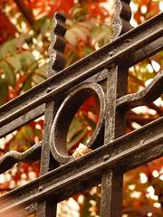 Haciendo foco (su-sa-ni-ta) Tags: autumn trees hojas rosario hoy otoo today junio argetina rojas rejas ocres cpolores