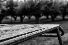 table in the woods (jenswambach89) Tags: outdoor schwarz weis tisch bokeh