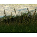 Assiniboine River 1